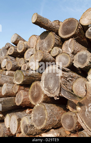 Felled logs stacked in a pile outdoors - Stock Photo