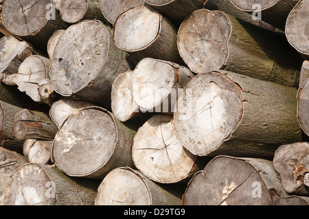 Closeup of felled logs stacked in a pile - Stock Photo