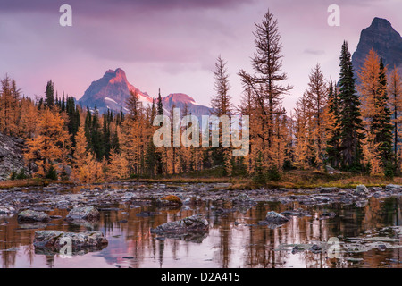 Storm clouds above Cathedral Mountain turn pink at sunrise as seen from Opabin Plateau in Yoho National Park, Canadian - Stock Photo