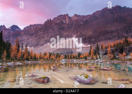 Pink clouds at sunrise above Mount Biddle reflected in a tarn on Opabin Plateau in Yoho National Park, BC, Canada. - Stock Photo