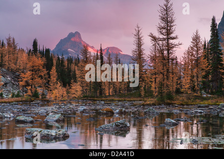 Early light on pink storm clouds over Cathedral Mountain reflected in a tarn on Opabin Plateau, Yoho National Park, - Stock Photo