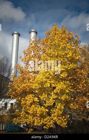 Berlin, Germany, maple tree in front of the CHP center HKW - Stock Photo