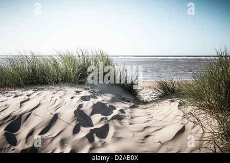 Grassy sand dunes on beach - Stock Photo