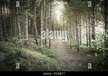 Dirt path in rural forest - Stock Photo