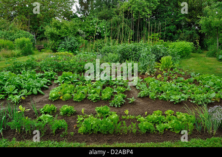 Vegetables plots: carrots and lettuce,spinach, lettuce and Milan cabbage, potatoe, broad beans. - Stock Photo