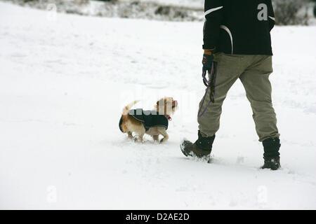 Yelverton, Devon, UK. 18th January 2013. One man and his dog in the snow on the edge of Dartmoor near Yelverton - Stock Photo