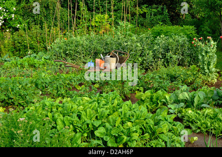 Vegetables beds : spinach, cabbage, potatoe, garlic, broad beans, Jerusalem artichoke. - Stock Photo