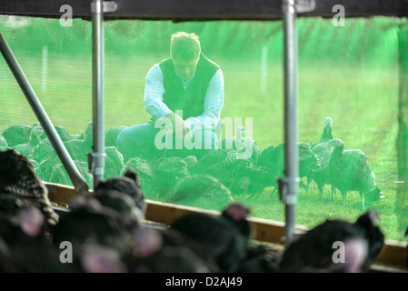 Farmer feeding turkeys outside barn - Stock Photo