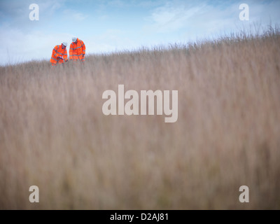 Ecologists examining tall grass - Stock Photo