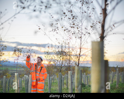 Ecologist examining young trees - Stock Photo