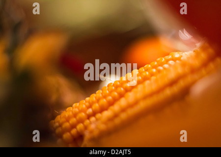 Close up of ears of corn - Stock Photo