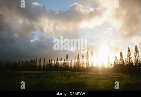 Sun shining through bare trees - Stock Photo