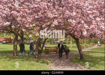 People walk on sunlit park path under canopy of trees & beautiful colourful pink cherry blossom in spring - Riverside - Stock Photo