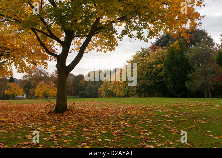 Fallen leaves & trees displaying rich autumn orange gold copper colours in scenic public parkland - The Stray, Harrogate, - Stock Photo