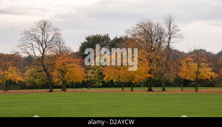 View across public parkland with line of trees displaying rich autumn orange gold copper colours - The Stray, Harrogate, North Yorkshire, England, UK. Stock Photo