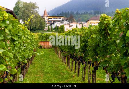Hofkellerei Winery In Liechtenstein - Stock Photo