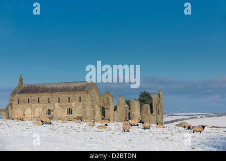 Sheep grazing on snow covered field, with Binham priory in background, Norfolk, England, January - Stock Photo
