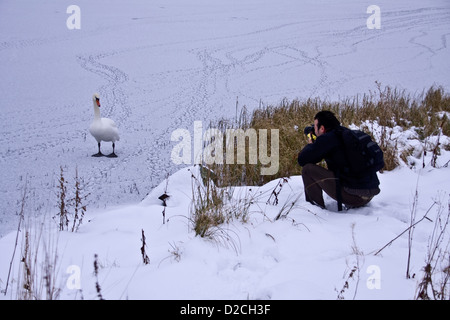 Photographer taking photographs of a Mute Swan standing on the snow covered icy pond at Piperdam Country Park in - Stock Photo