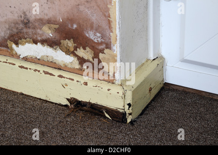 Rising Damp on an Internal Wall of a House with Rotten Skirting Board, UK PROPERTY RELEASED - Stock Photo