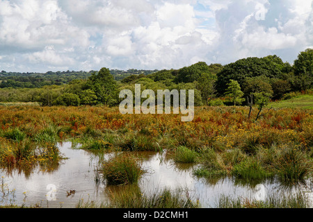 Teifi marshes nature reserve, Welsh Wildlife Centre, Cilgerran, Pembrokeshire, Wales, UK - Stock Photo