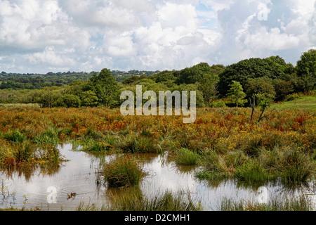 Teifi marshes nature reserve, Welsh Wildlife Centre, Cilgerran, Pembrokeshire, Wales, UK - Stock Photo
