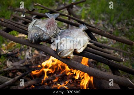 Piranha, caught on the Amazon River, grill over a fire in the jungle. - Stock Photo