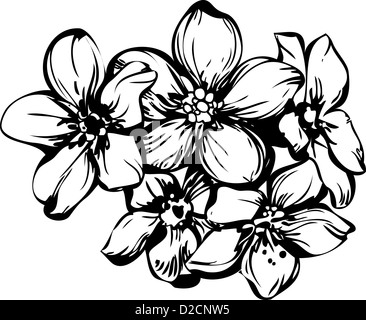 sketch five flowerets in one bouquet - Stock Photo