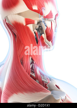 Male musculature computer artwork - Stock Photo
