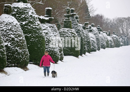 Lucy Robinson walks her dog Sweep in the snow at Clipsham Yew Tree Avenue in Rutland. - Stock Photo