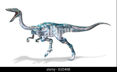 Coelophysis dinosaur computer artwork bipedal - Stock Photo