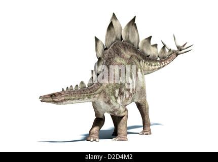 Stegosaurus dinosaur herbivorous dinosaur lived during the Upper Jurassic period - Stock Photo