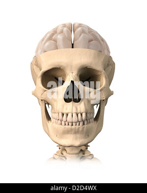 Human head computer artwork - Stock Photo
