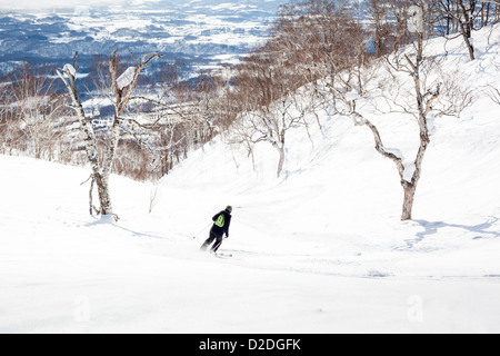 Woman skiing off-piste through birch trees in Niseko, Japan. - Stock Photo