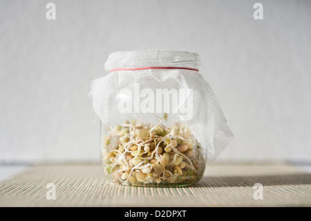 Mix of fresh sprouts growing in glass jar - Stock Photo