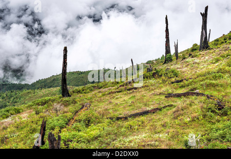 A photo showing the effects of disease and deforestation near the town of Dirang near Tawang, Arunachal Pradesh, - Stock Photo