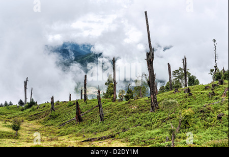 Disease and deforestation in the high mountains of western Arunachal Pradesh near the small town of Dirang, India. - Stock Photo