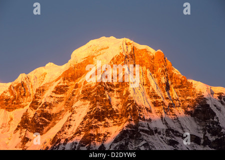 Alpenglow at sunrise on Annapurna South, Nepelese Himalayas. - Stock Photo