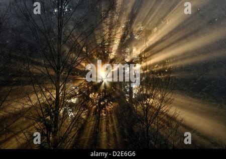 Sunburst crepuscular rays god beams light through trees sunbeams - Stock Photo