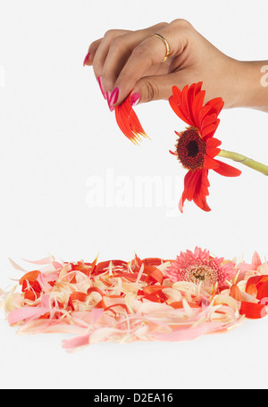 Woman's hand plucking petals from daisy - Stock Photo