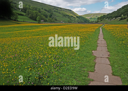 Path leading through the hay meadows at Muker in Swaledale, UK - Stock Photo