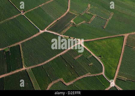 France, Marne (51), Champagne vineyard landscape of vineyard parcels aerial (aerial photo) - Stock Photo