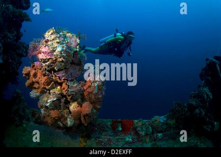 Divers on the Wreck Kyokuzan Maru Japanese freighter, sunk in 1944, Malawig ,Coron, Palawan, Philippines, Asia - Stock Photo