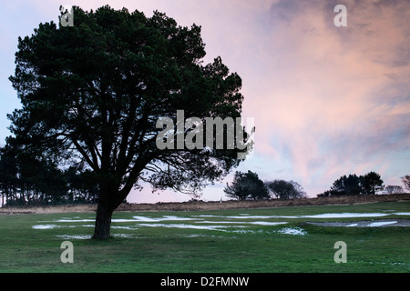 Teignmouth,Devon, England. January 21st 2013.  A lone tree on a golf course in mid winter at sunset with the remains - Stock Photo