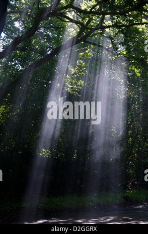 Sun's rays shining through trees on country lane, near Wych Cross, Forest Row, Ashdown Forest, Sussex, England - Stock Photo