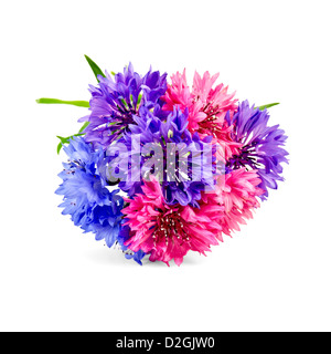 Bouquet of blue, pink and violet cornflowers isolated on white background - Stock Photo