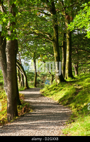 Dappled sunlight on the path round Derwent water through Brandelhow Woods, Lake District, Cumbria, England, UK - Stock Photo