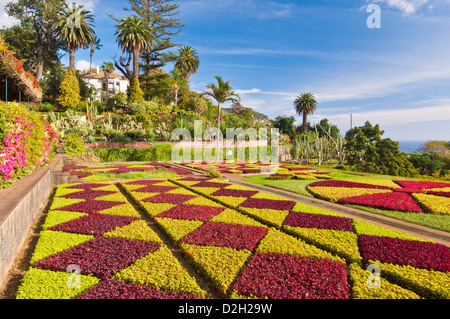 Formal garden display in the Botanical gardens Jardim Botanico Funchal Madeira Portugal EU Europe - Stock Photo