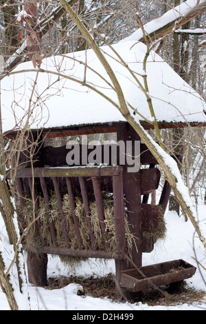 Feeder for wild animals in winter in forest - Stock Photo