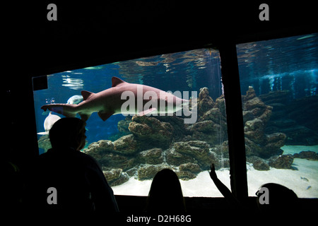 Albufeira, Portugal, visitors in front of the shark tank at the Aquarium Zoo Marine - Stock Photo