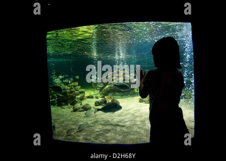 Albufeira, Portugal, a child in front of the Aquarium Zoo Marine - Stock Photo